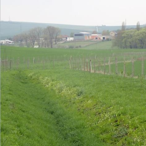 Stabilisation of runoff pathways Image
