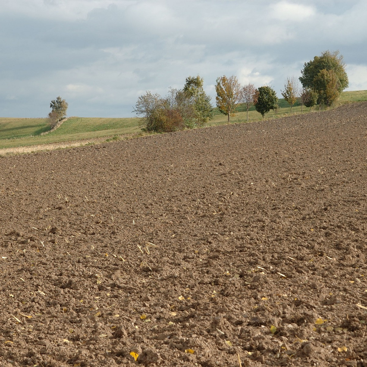 Coarse seedbed preparation Image